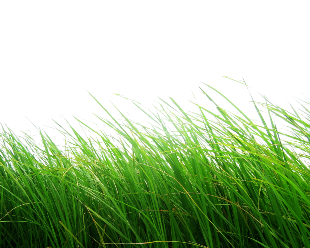 Grass Png Images, Pictures Transparent #44873