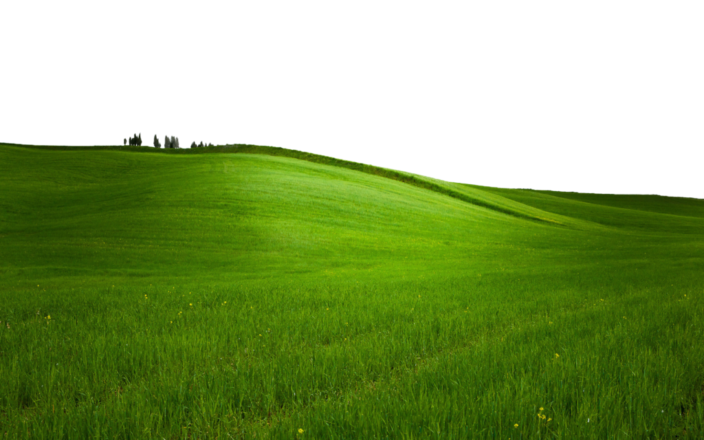 Grass Transparent PNG Pictures