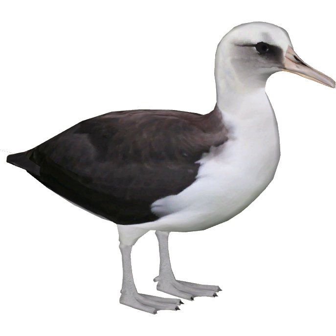 Great Appearance Albatross Picture image #47767