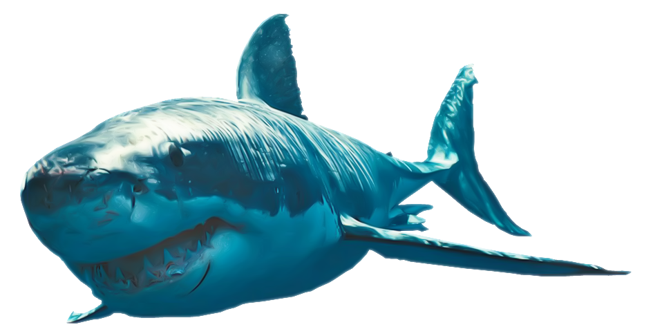 Great White Shark photo png