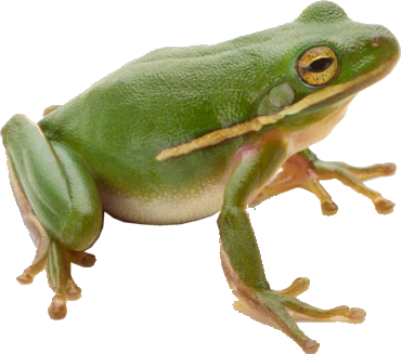 Green Frog PNG image #43130