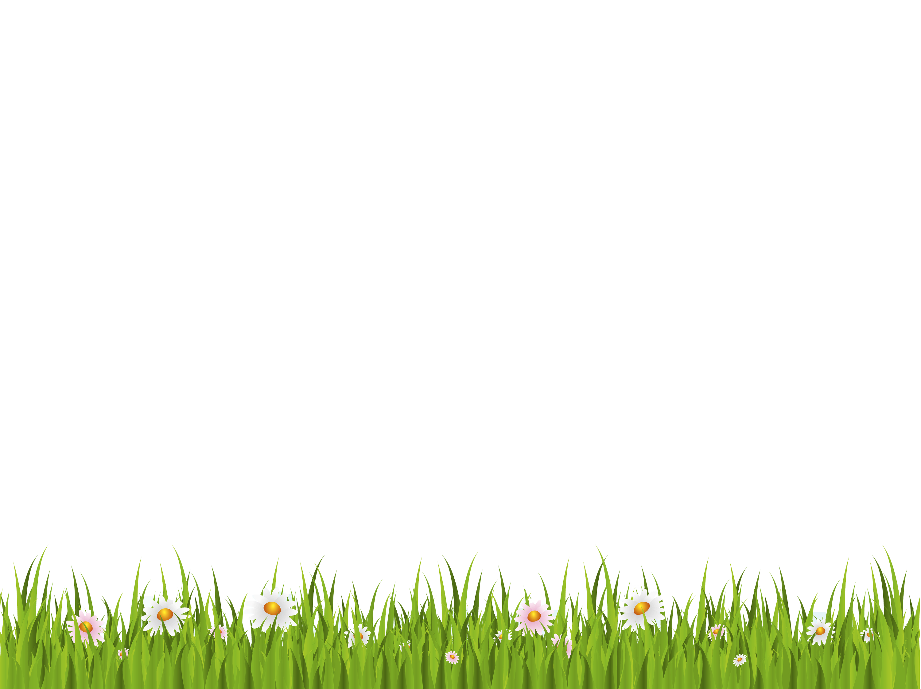 Green Grass On White Background Png image #4752