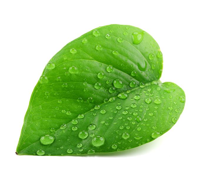 Green Leaf PNG image #38617