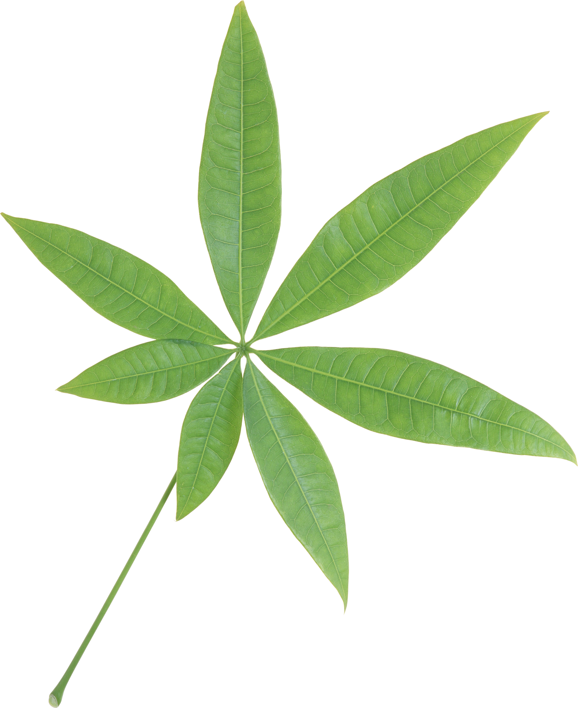 green leaf png single