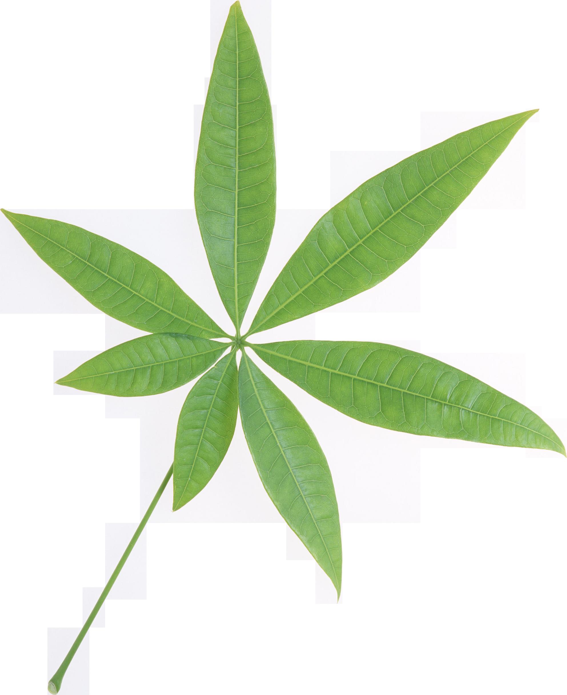 Green Leaf Png Single image #44863