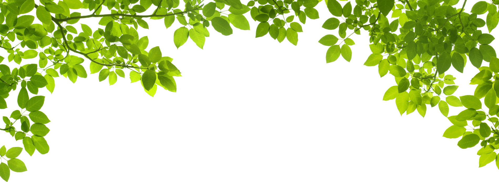 Green Leafs Png image #44853
