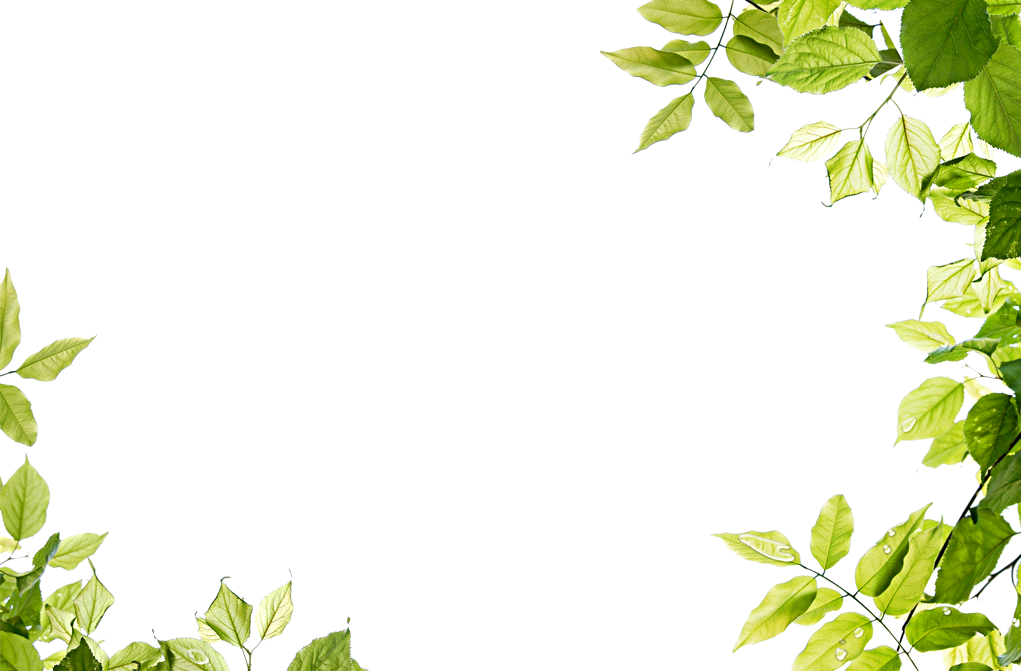 green leaves frame png image