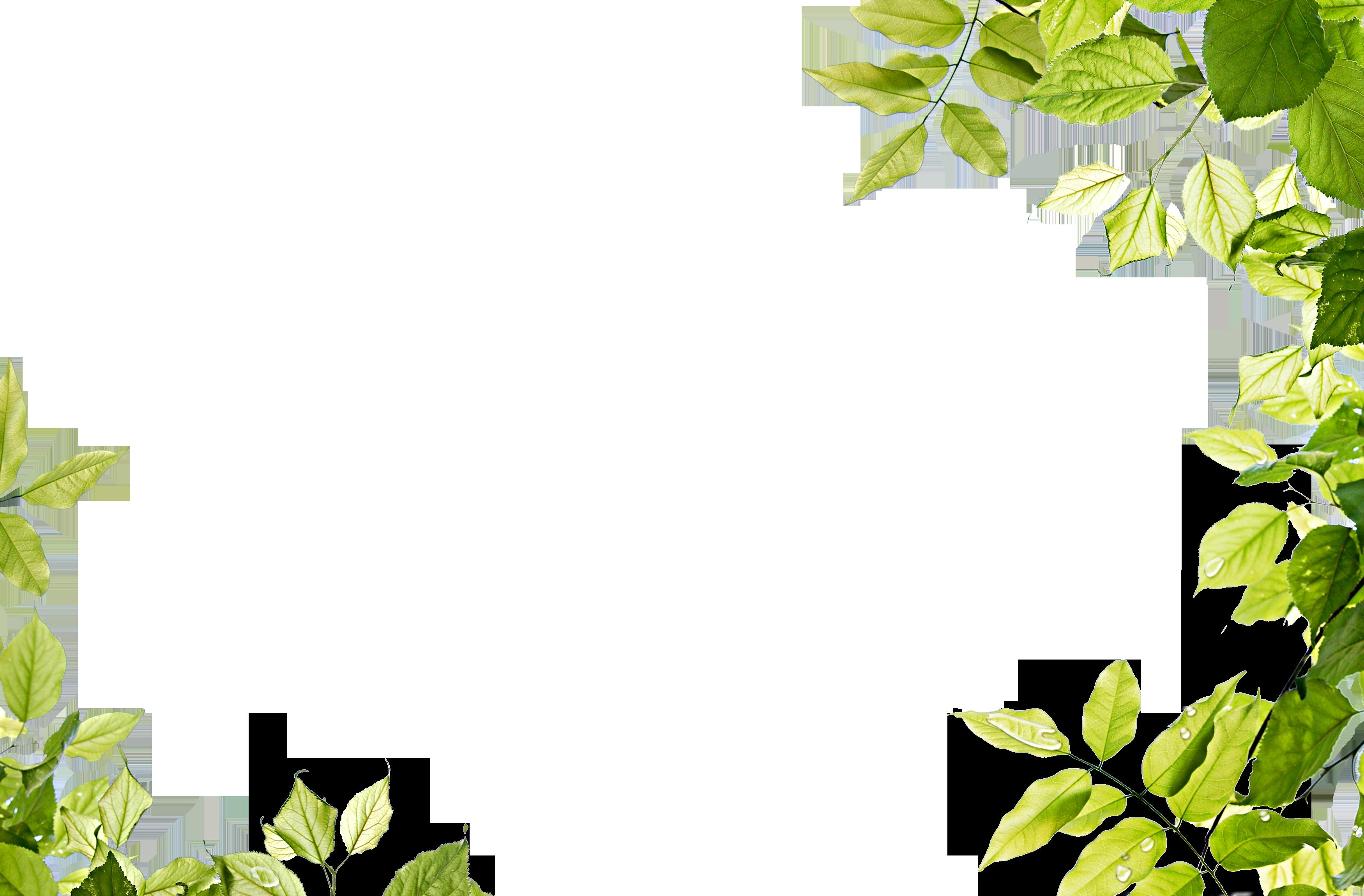 green leaves frame png image
