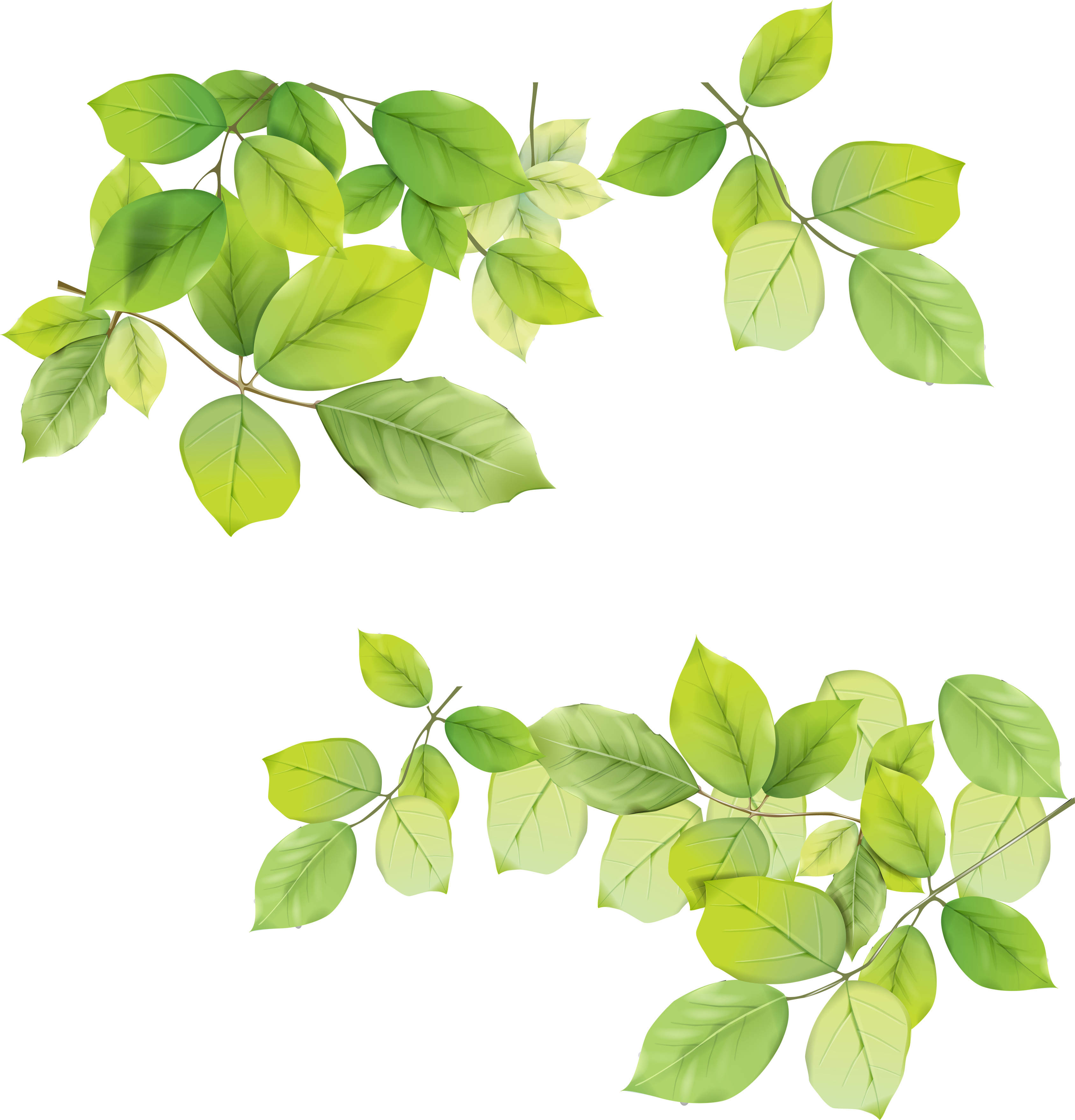 green leaves png picture