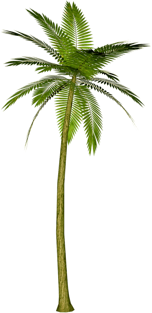 Green Palm Tree Png image #43081