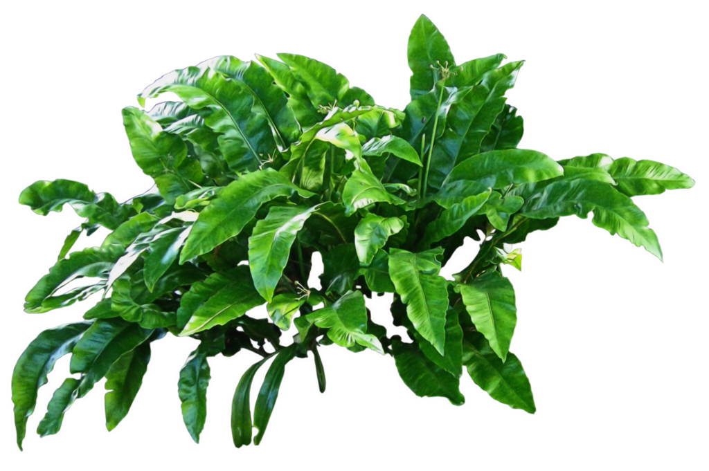 Green Plants Png Transparent image #44902