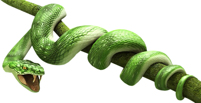 Green Snake Png