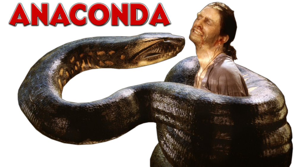 Guy Grabbed Anaconda Photos image #48144