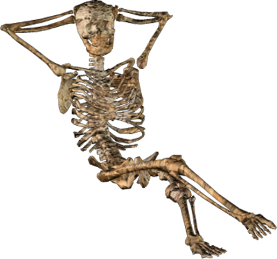 Halloween Skeleton Png image #43860