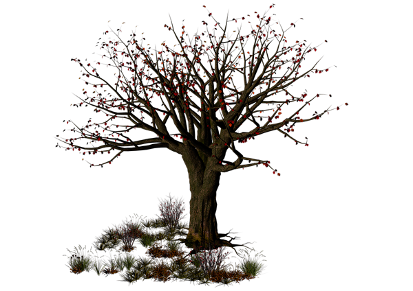 Best Free Halloween Tree Png Image image #32624