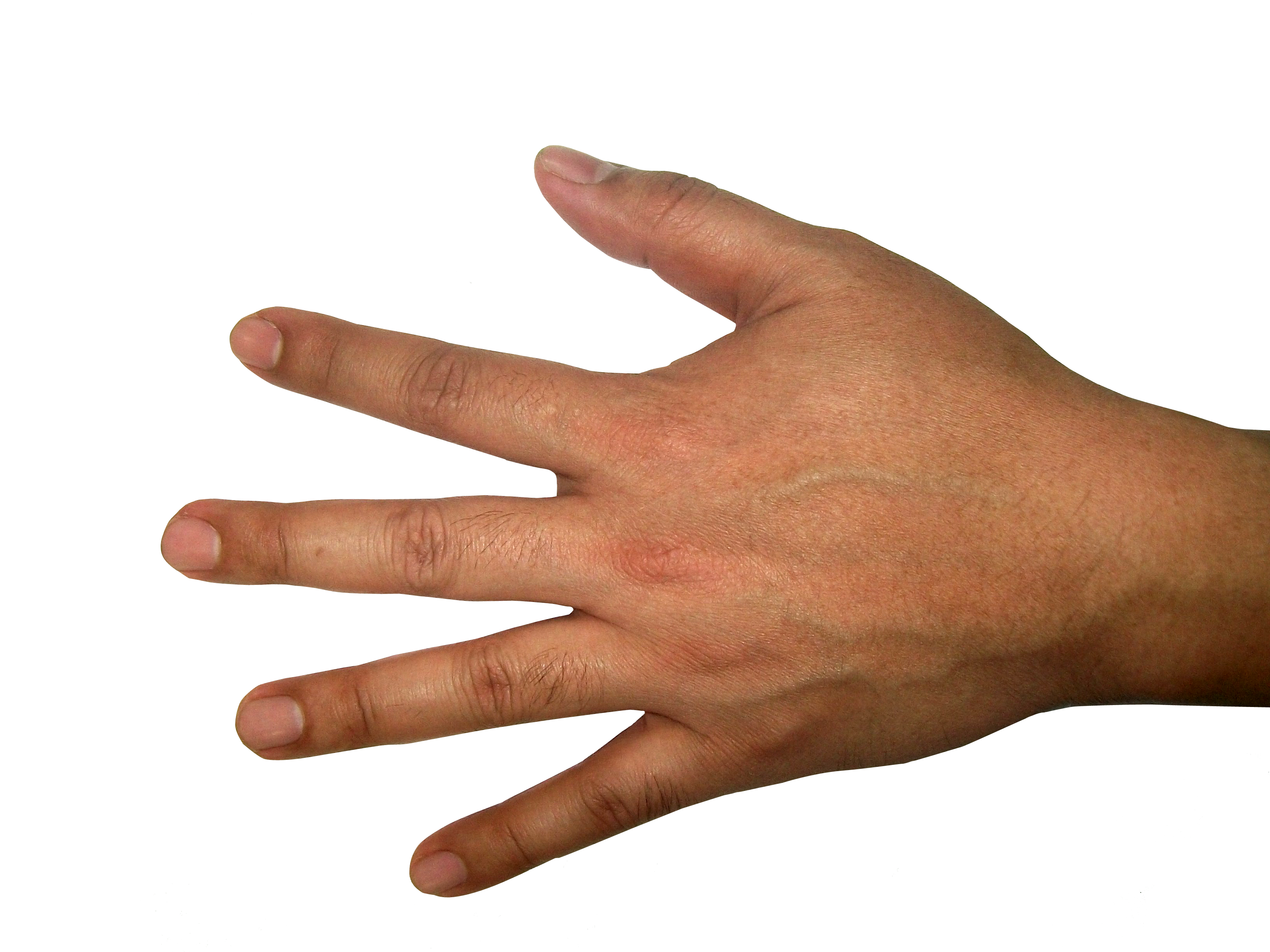 Hands Png Photo image #44741
