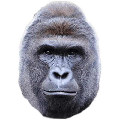 harambe gorillas face png