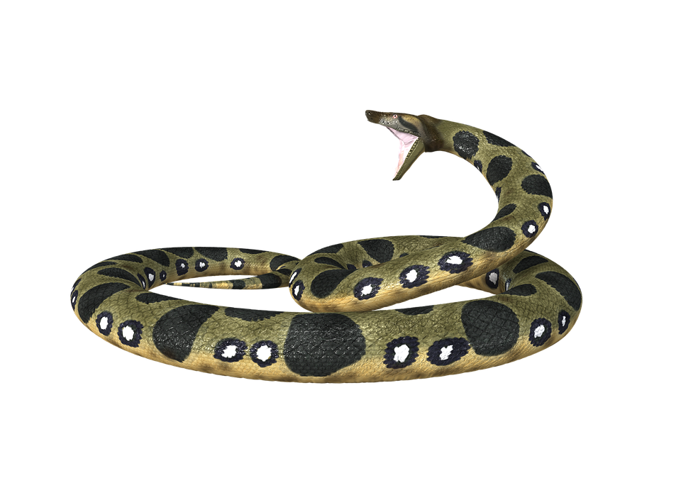Hd Anaconda Toxic Transparent Background image #48135