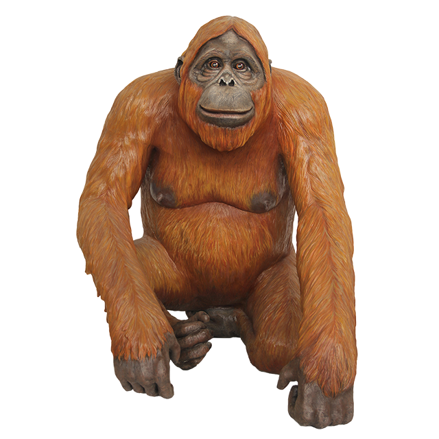 HD charisma Orangutan Yellow Photo