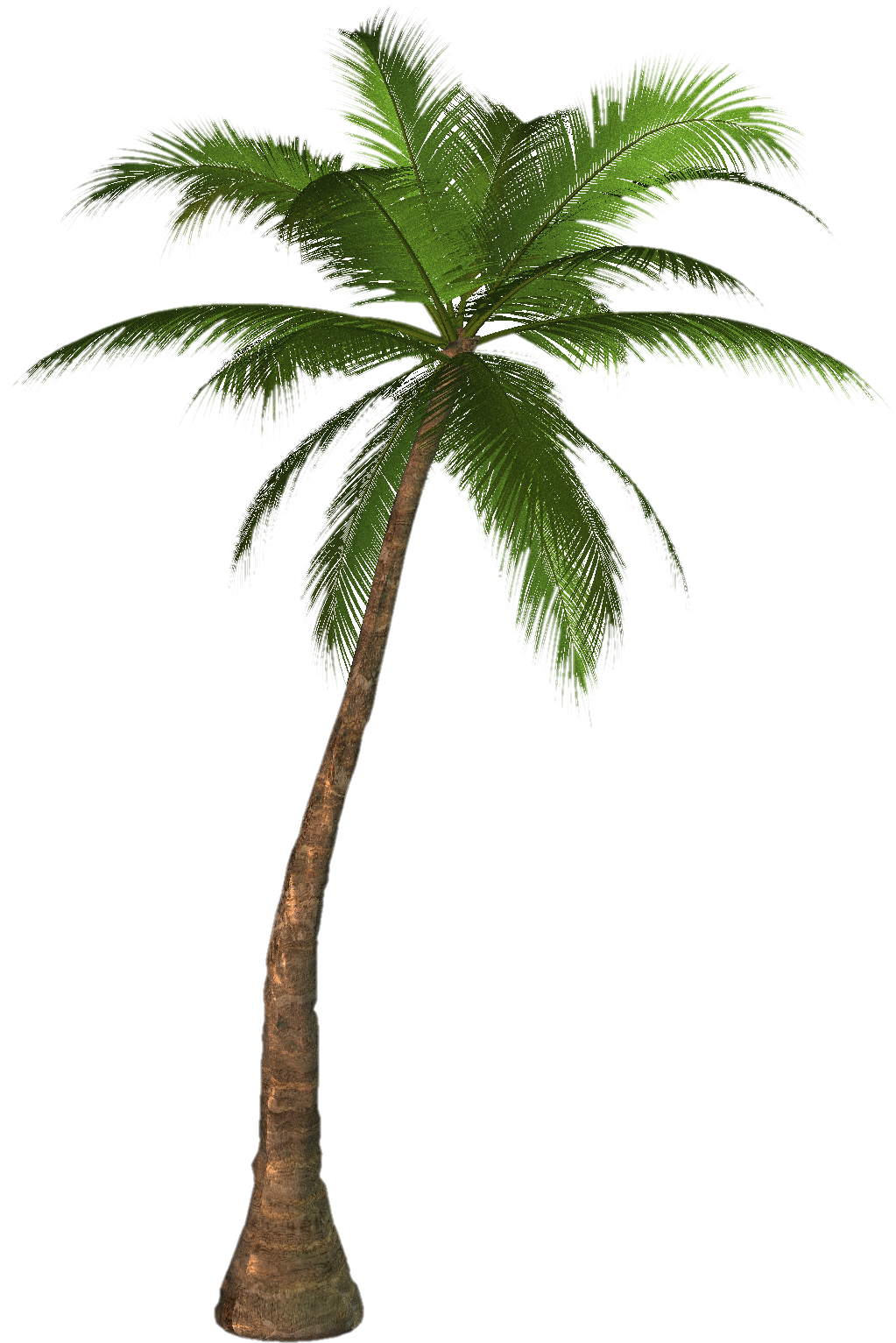 Hd Coconut Tree Png Transparent Background