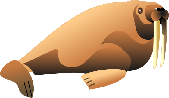 Hd Walrus Png Transparent Background