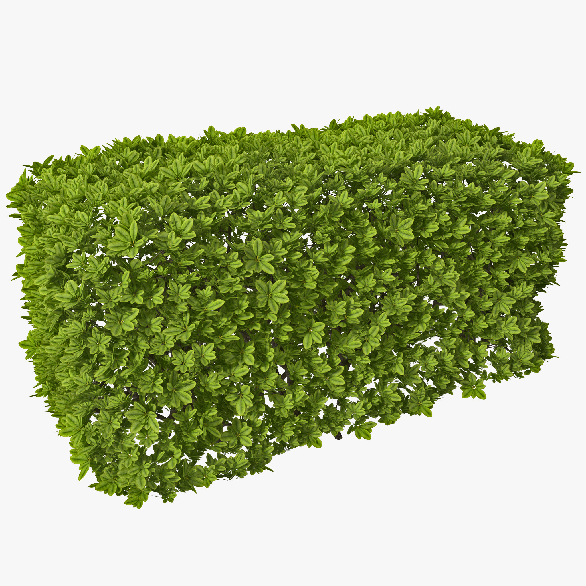 Download Images Free Hedges