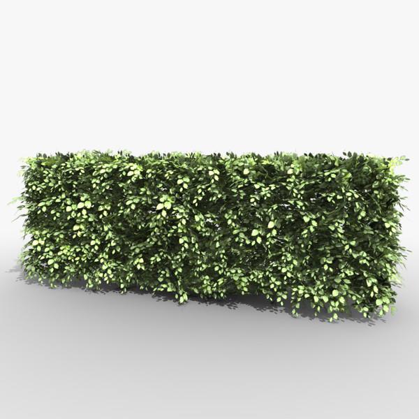 hedges png
