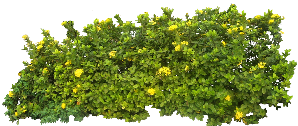 Download And Use Hedges Png Clipart image #32438