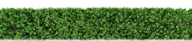 PNG Hedges HD image #32447