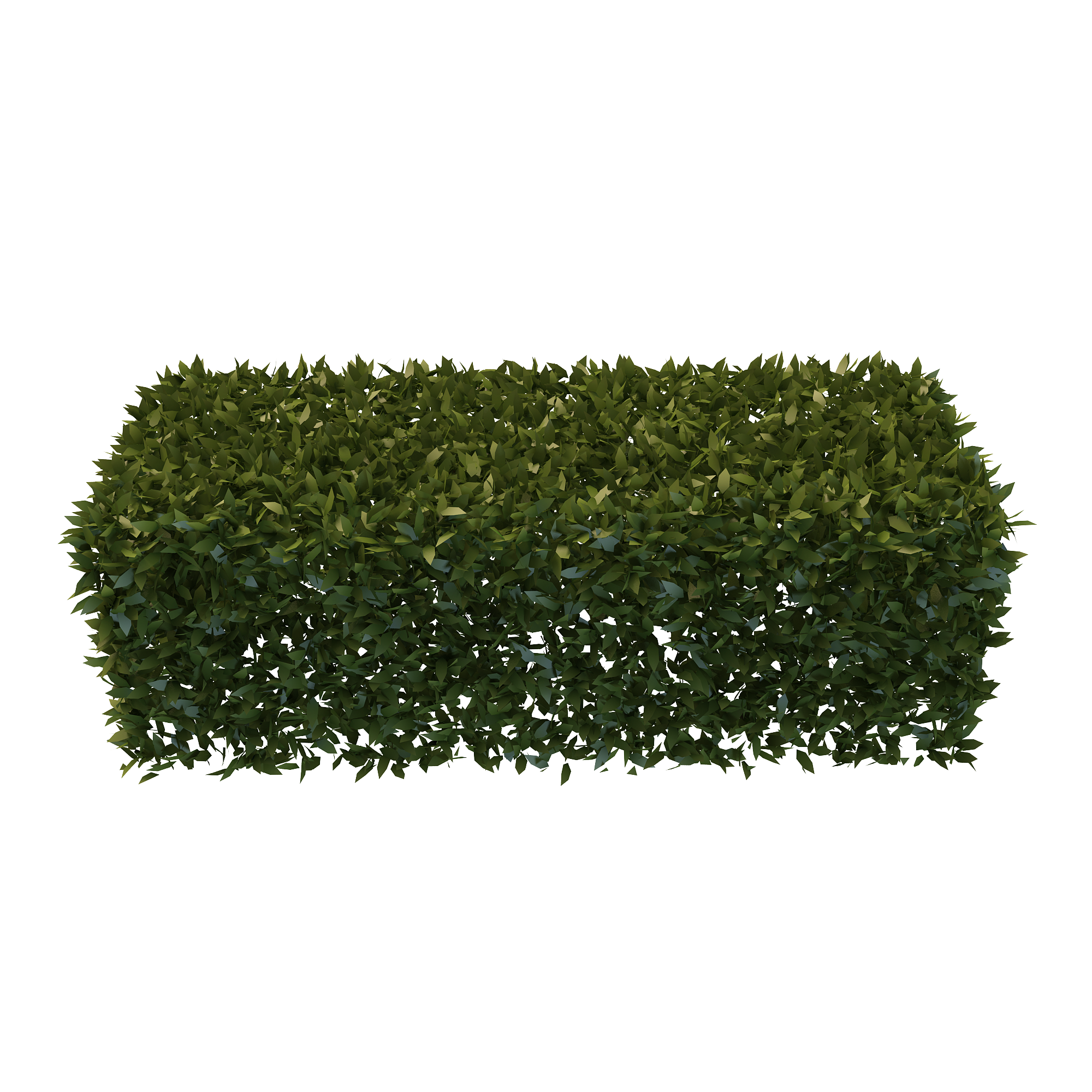 PNG Hedges    Free       Download     32448     Free    Icons and PNG