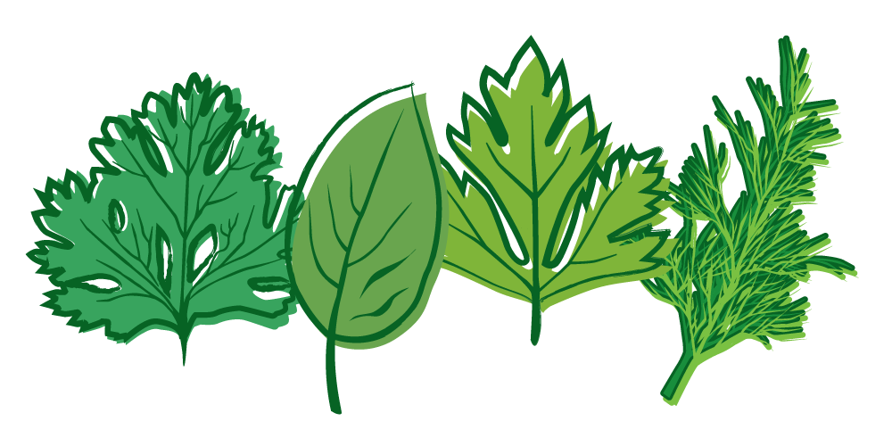 Transparent Png Herbs image #33563