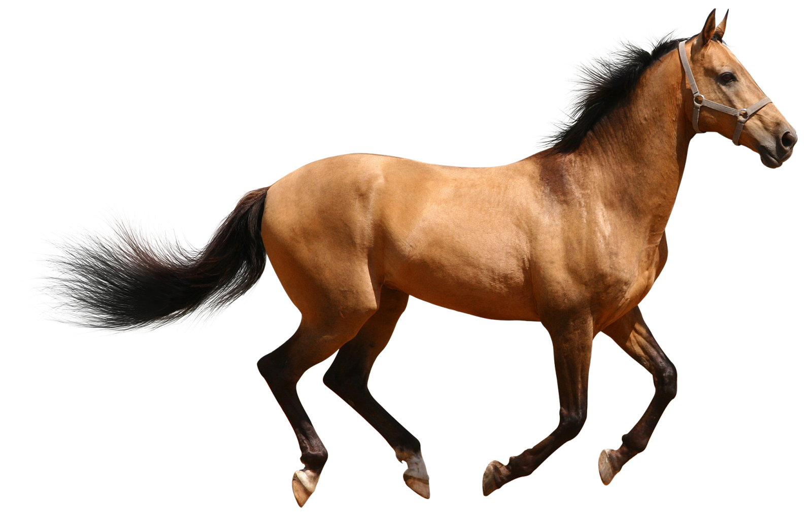 Horse 3d Animal download 3d animal PNG images
