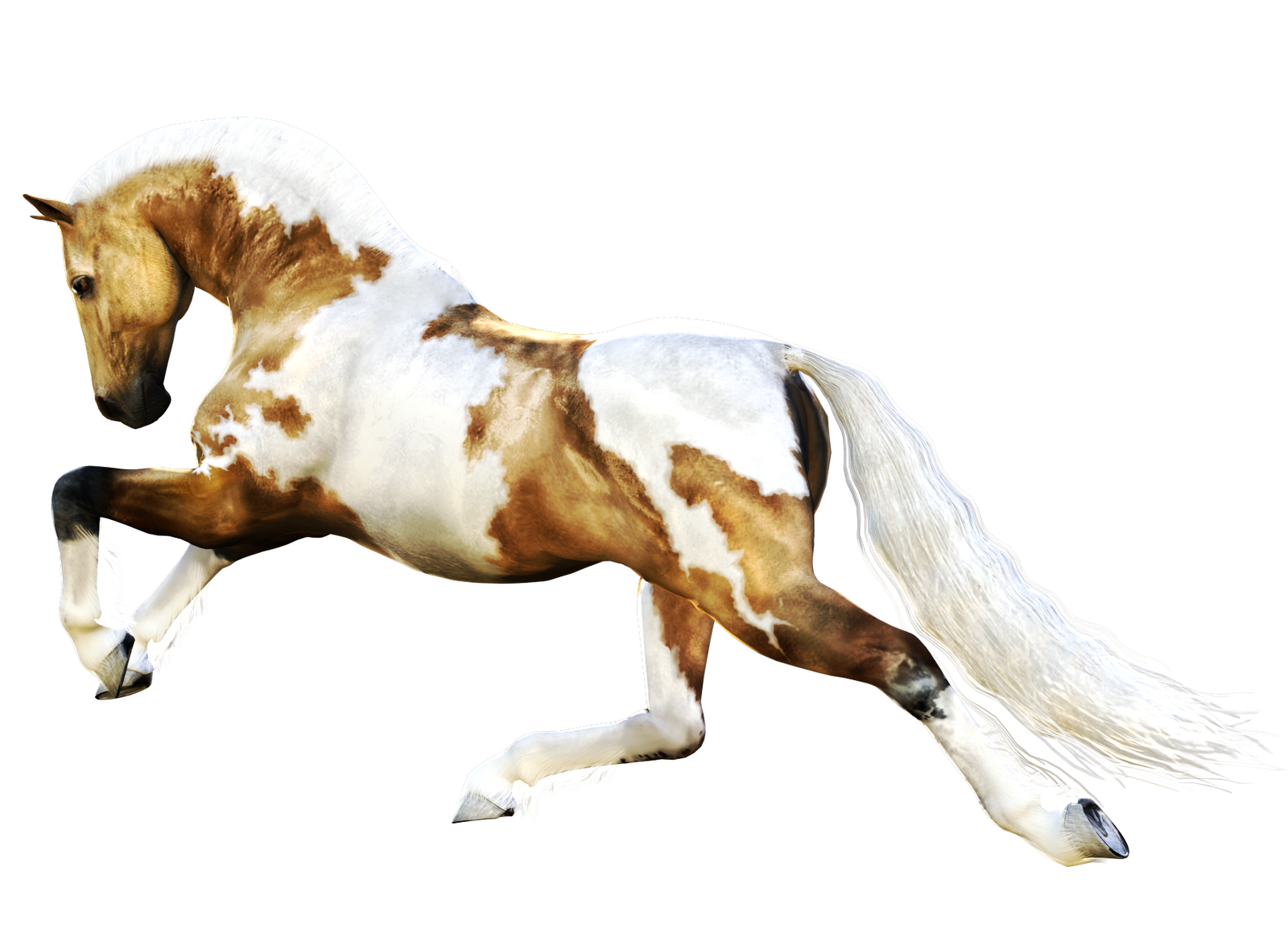 Browse And Download Horse Png Pictures image #22549