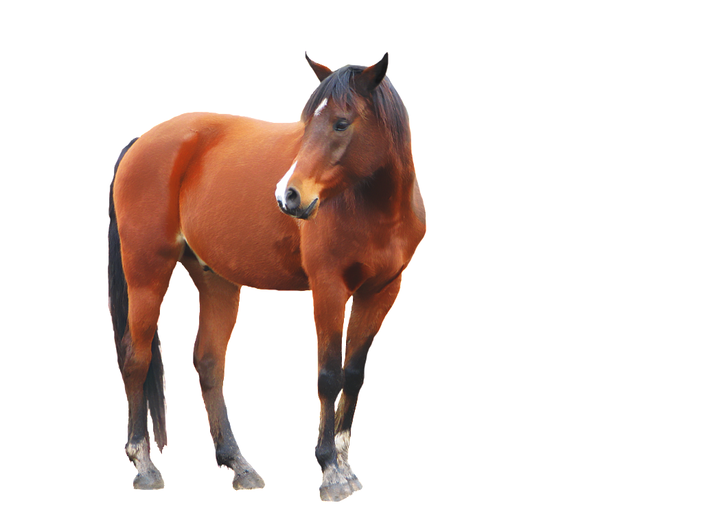 horse transparent png pictures free icons and png