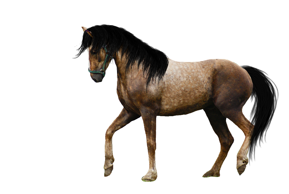 PNG Image Horse image #22560