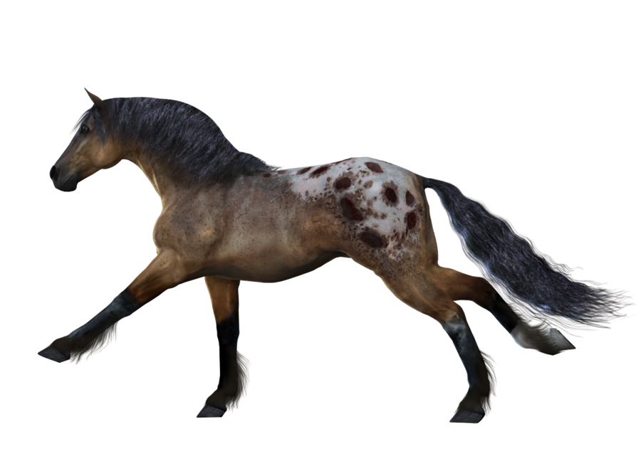 Hd Transparent Png Horse Background image #22566