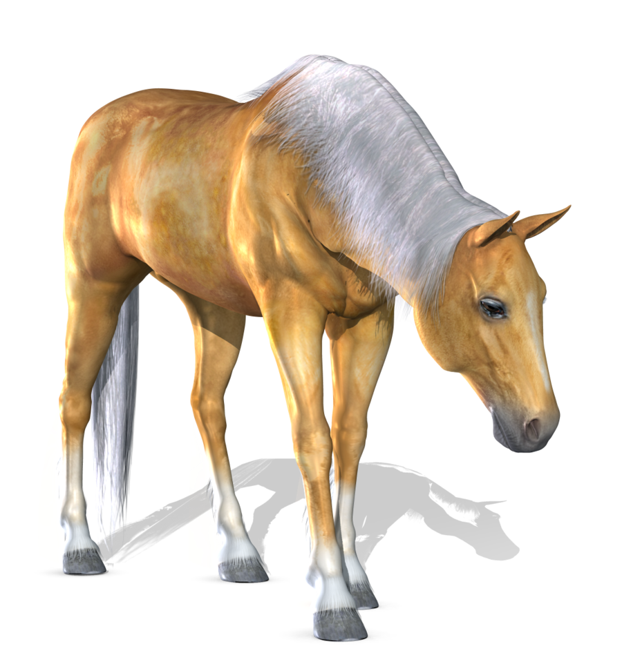 Download Png Horse High quality