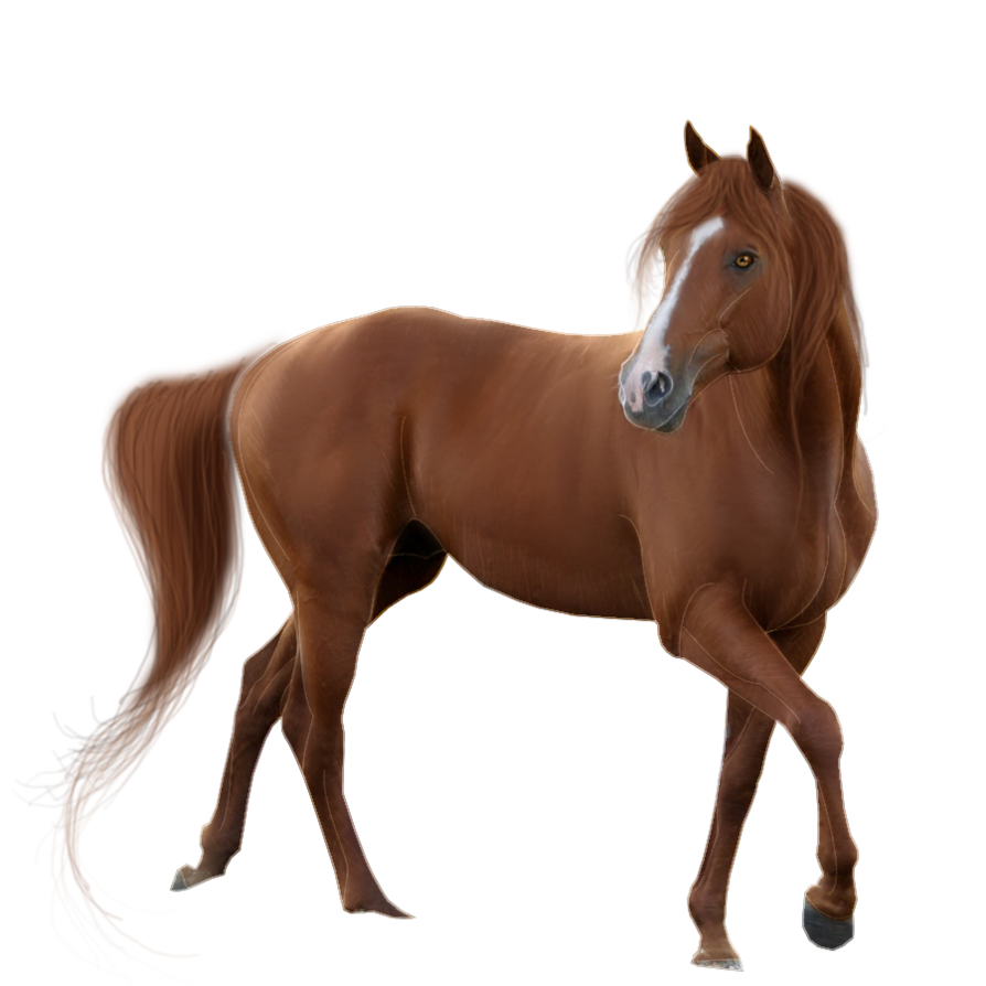 PNG Picture Horse image #22543