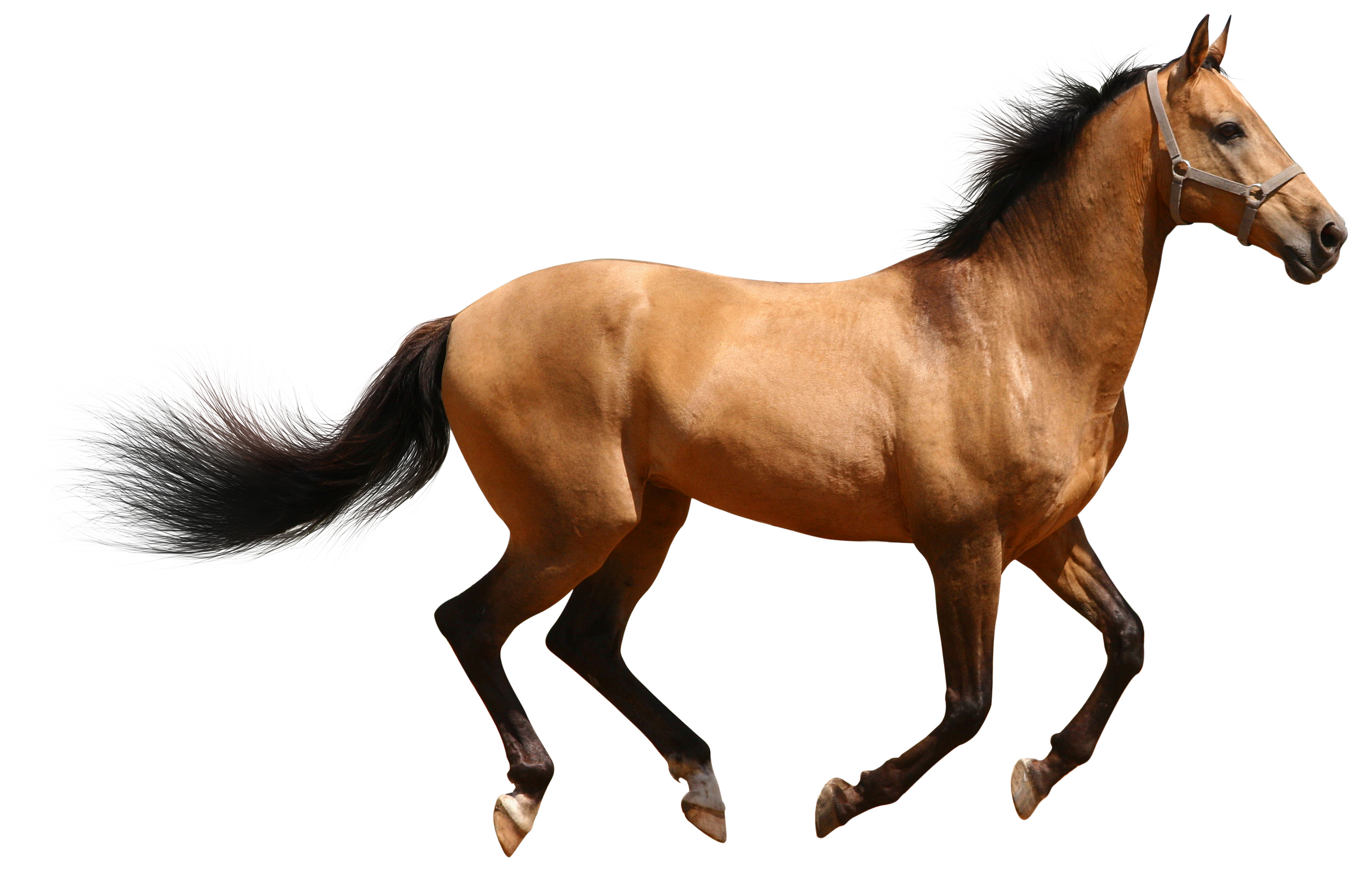 Png Horse Vector Free Download image #22544