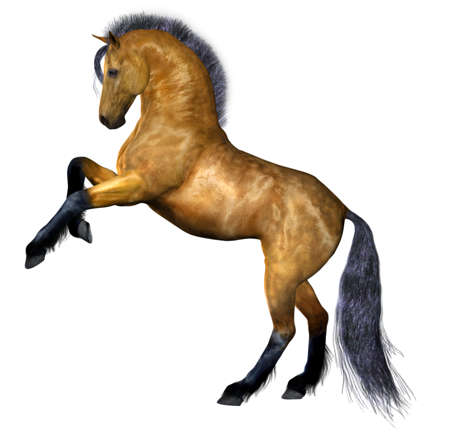 Clipart Png Horse Best image #22545