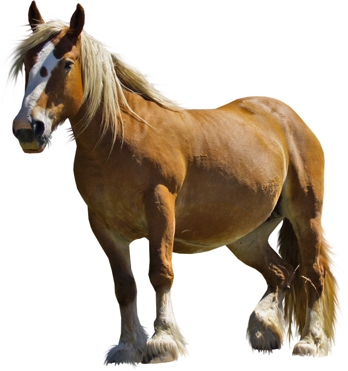 High-quality Horse Cliparts For Free! image #22546