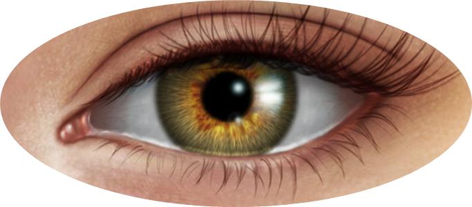 Human Eye PNG Image image #42325