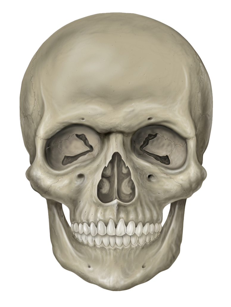 Human Skull Picture image #47882