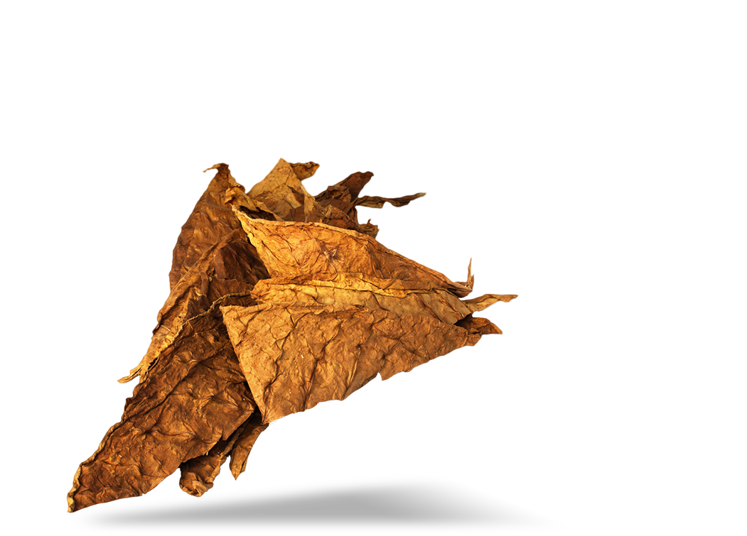 image for high quality tobacco leaf