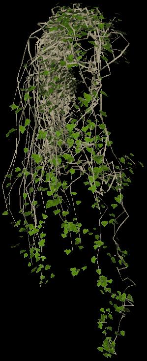 Ivy Vine Texture Png image #43661