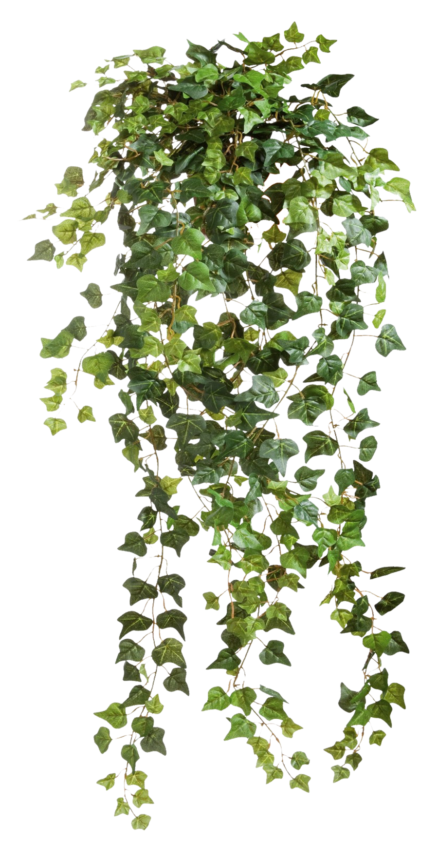 ivy vines clear cut png