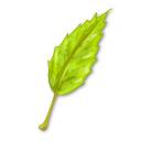 Simple Leaf Png image #7076