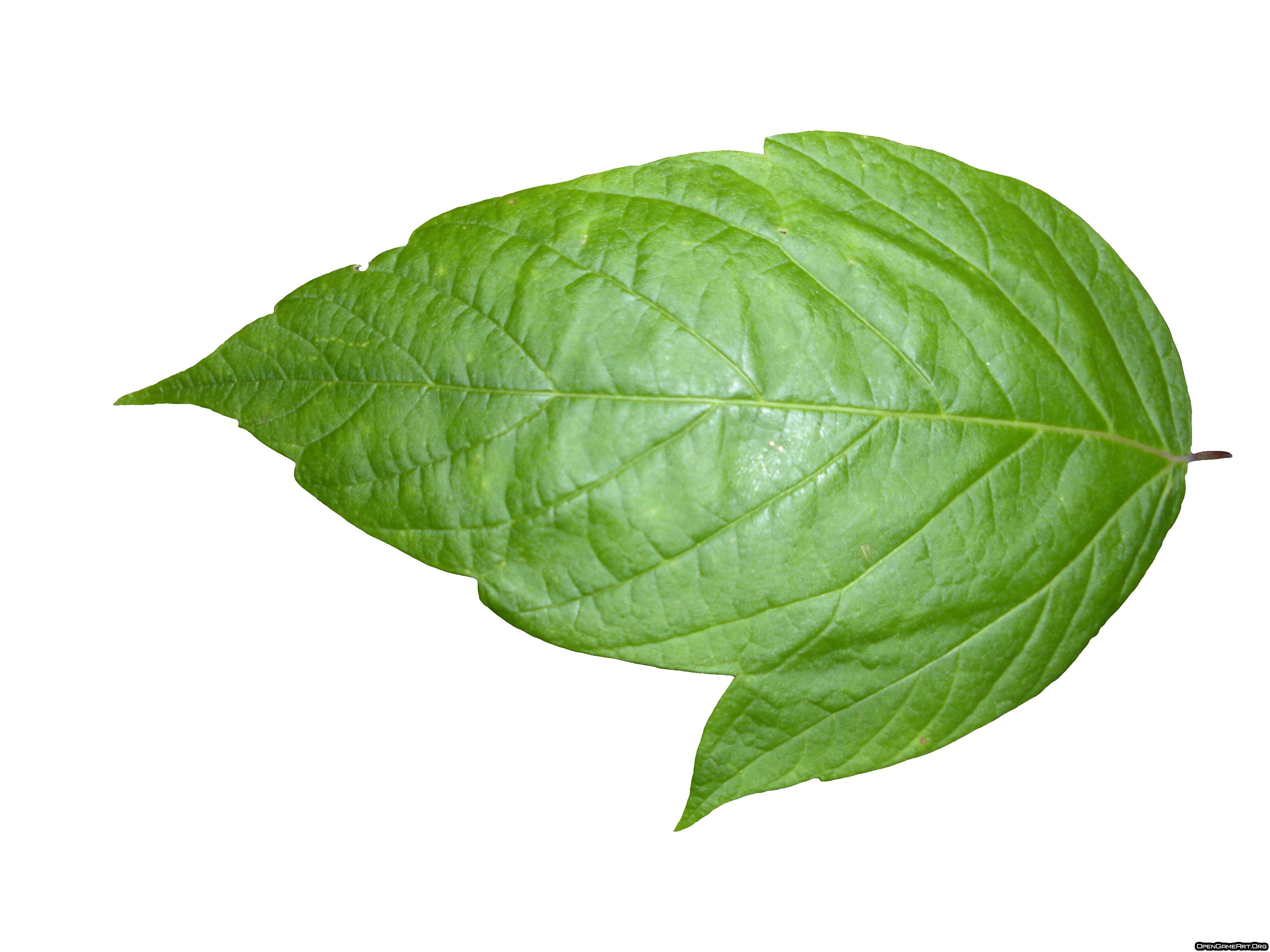 Leaf Png image #38611