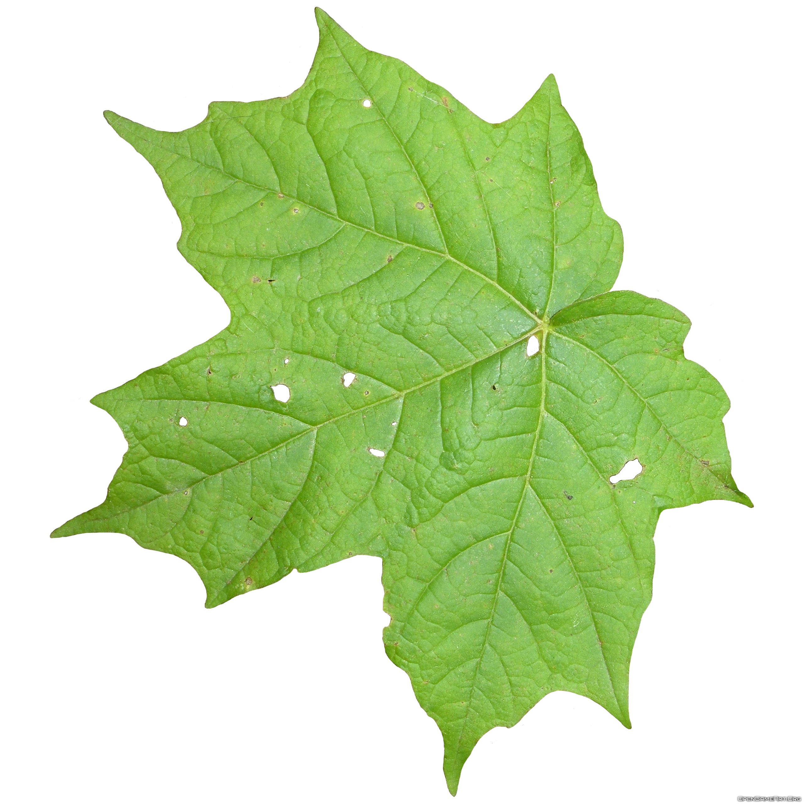 Leaf Png image #38621