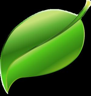 Leaf Png image #38627
